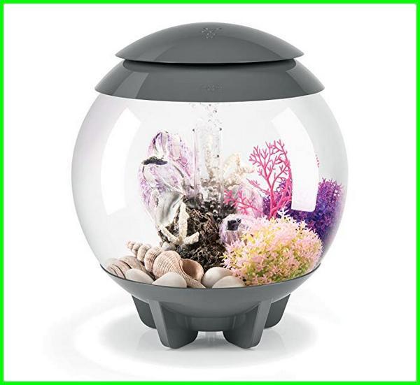 aquarium cupang hias, aquarium cupang cantik, cara hias aquarium cupang, contoh aquarium cupang, dekorasi aquarium cupang, aquarium foto cupang, akuarium fishland ikan cupang, cupang betta fish aquarium, aquarium ikan cupang hias, aquarium untuk cupang hias, aquarium mini cupang hias, ukuran aquarium cupang hias