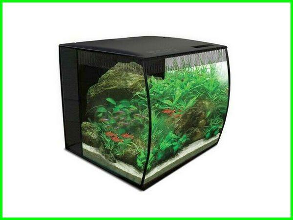 aquarium cupang keren, aquarium cupang dengan filter, aquarium cupang bogor, aquarium ikan cupang berapa, dekorasi aquarium cupang, aquarium foto cupang, ukuran aquarium cupang giant, aquarium untuk cupang giant, aquarium ikan cupang hias