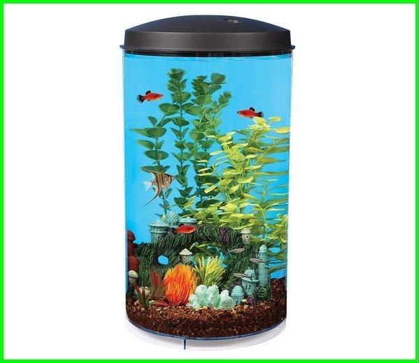 aquarium mini cupang hias, ukuran aquarium cupang hias, aquarium cupang murah jual, menghias aquarium cupang kecil, lampu aquarium cupang, aquarium mini cupang, rak aquarium cupang, aquarium soliter cupang, aquarium ikan cupang surabaya, aquarium cupang terbesar, aquarium toples ikan cupang