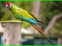 burung macaw harga, harga burung macaw anakan, harga burung macaw anakan termurah, macaw burung cantik yang berwarna warni, cari burung macaw, contoh burung macaw, burung macaw dan harganya, burung macaw dijual, burung macaw dilindungi, burung macaw di alam liar, foto burung macaw dan harganya, fakta burung macaw, burung macaw gambar, burung macaw harganya berapa, harga burung macaw di indonesia