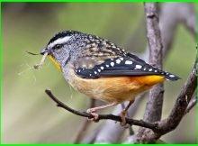 macam burung kecil pemakan serangga, macam macam burung kecil dan namanya, aneka macam burung kecil, jenis burung kecil cantik, jenis burung kecil dan namanya, macam2 burung kecil, apa makanan burung kecil, nama burung kecil, nama burung kecil warna warni, nama burung kecil dan gambarnya, jenis burung kecil fighter, burung kecil gampang gacor, burung kecil indah