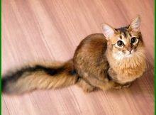 Nama2 Kucing Betina Islam Archives Daftarhewan Com